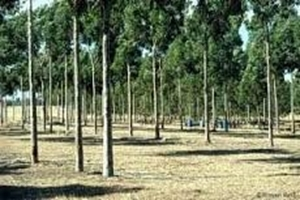 Picture for category Farm Forestry